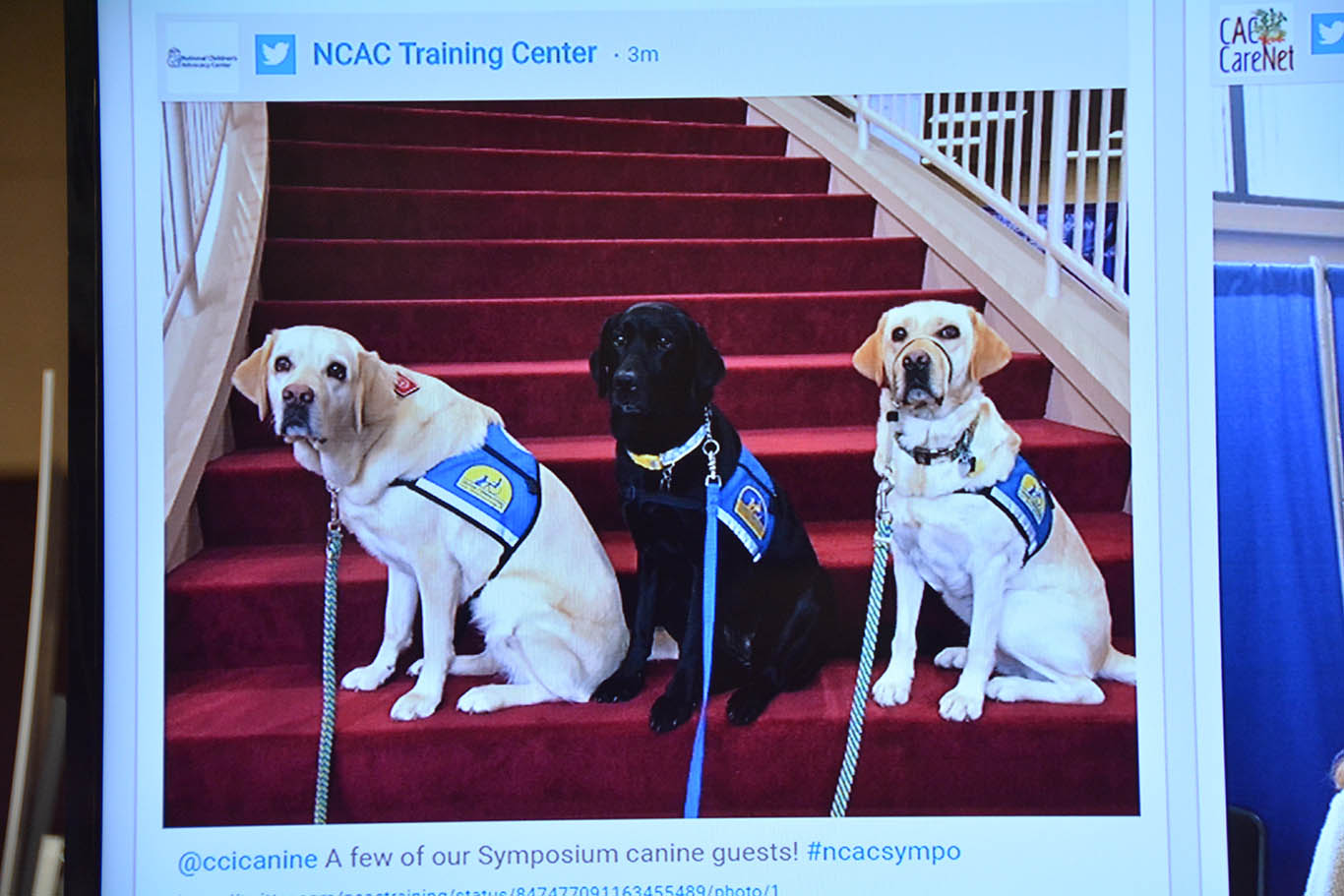 canine companions guests